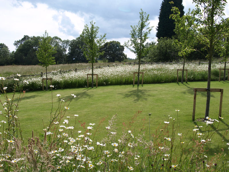 The meadow planting links the garden back to the landscape