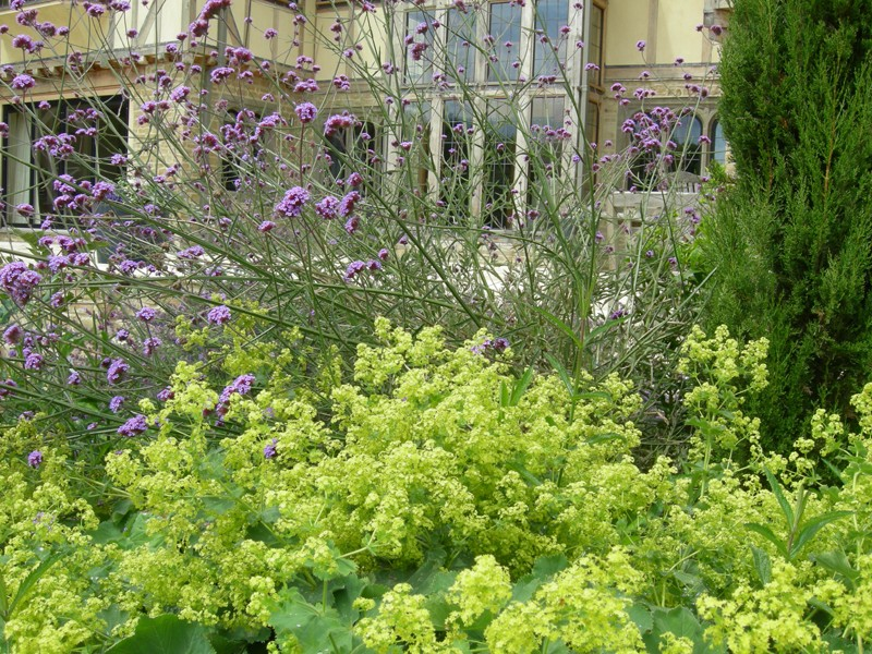 Herbaceous planting around the terrace